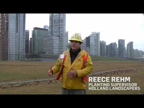 Living Green Roof: Vancouver Convention Centre - BC, Canada