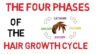 Understanding The Hair Growth Cycle | Adam Explains