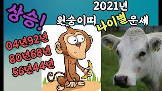 2021년 원숭이띠 운세 2021년 나이별 원숭이띠 운세(04년 92년 80년 68년 56년 44년)
