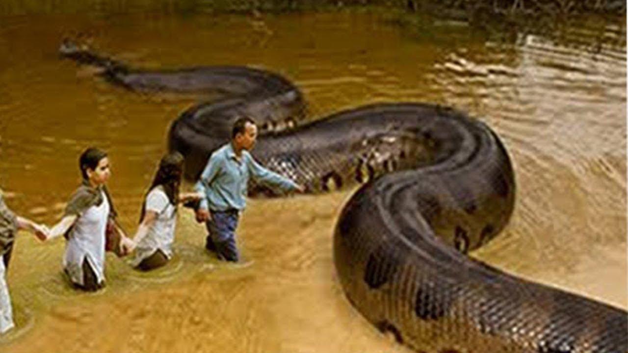 أخطر 10 انواع ثعابين فى العالم Youtube