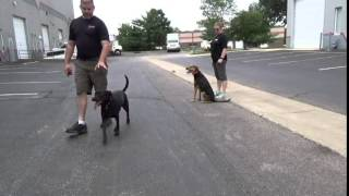 Germand Shepherd Mix Transforms With Off Leash K9 Training, Maryland