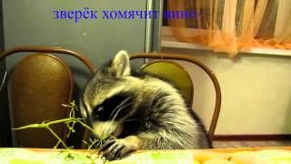 Смотрите видео онлайн  сериалы, мультики, игры, клипы, фильмы на Яндексе