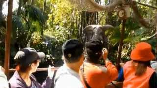 Disneyland Jungle Rivers of the world Cruise in a wild river area of the park so exciting trip