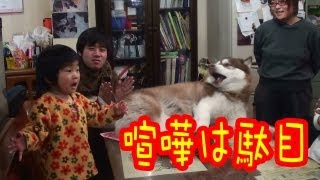 grandchild goes into mediation of a quarrel of a dog, but since it ...