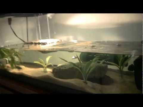 20gallon painted turtle tank