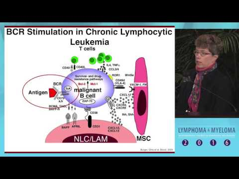 The BCR signaling pathway in CLL