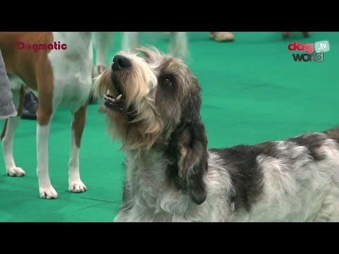 Houndshow 2016 - Best Veteran in Show