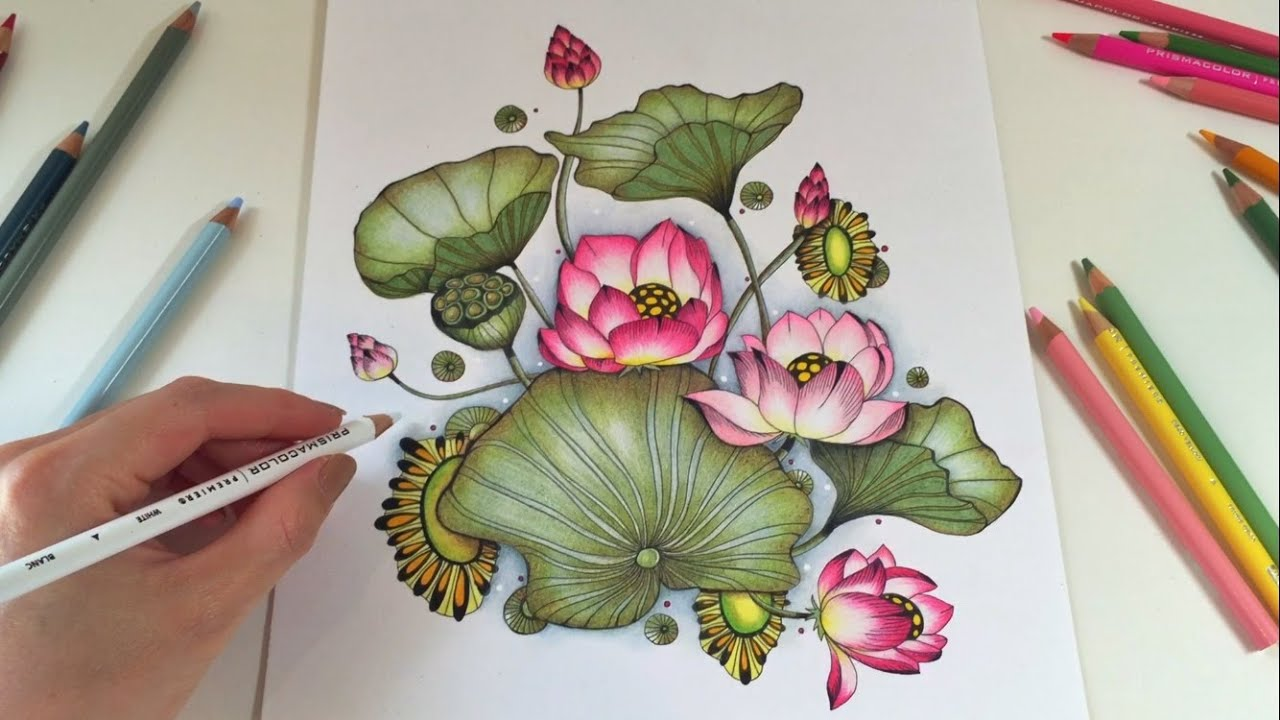 Botanical Art Coloring Book : LOTUS BLOSSOM Coloring With Colored Pencils Botanical Wonderland Coloring Book YouTube