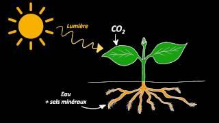 Nutrition et organisation des végétaux chlorophylliens (5e)