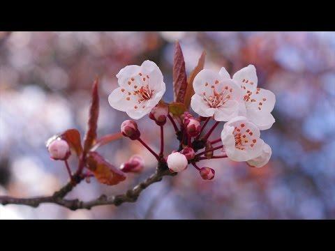 Sebastian Davidson - Cherry Blossom (Original Mix) [2008 / Outside The Box] [HD]
