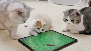 [Cat Live] Cats are so fascinated by the games for them