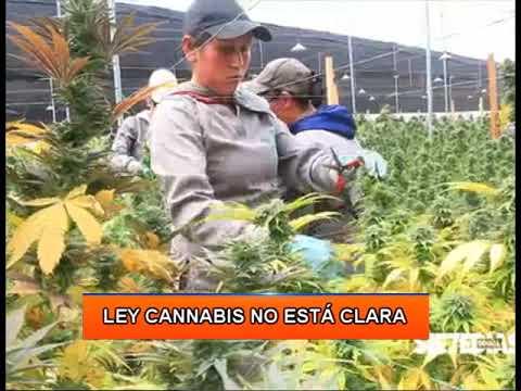 Ley Cannabis no está clara