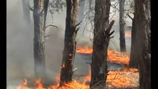 Экология Украины.avi(экологический ролик о состоянии окружающей среды Украины., 2011-06-02T11:09:17.000Z)