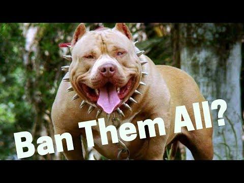 Are Pitbulls Dangerous And Aggressive? Should We Ban Them?