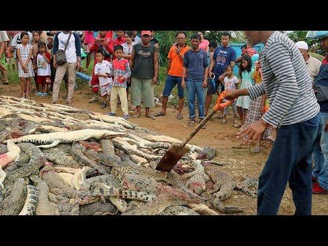 دفن 300 تمساح قتلها قرويون انتقاماً لمقتل رجل في إندونيسيا…  - نشر قبل 16 دقيقة