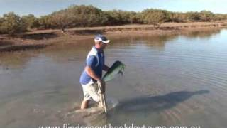 Dolphin Fish Stranding Port Augusta