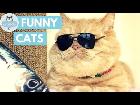 Funny Cats And Cute Kittens #13 ✔
