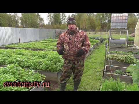 Вопрос: Для чего садят в огороде сидераты?