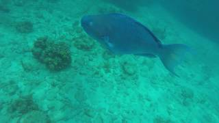 Norwegian Snorkeling Excursion at Honduras May 2018