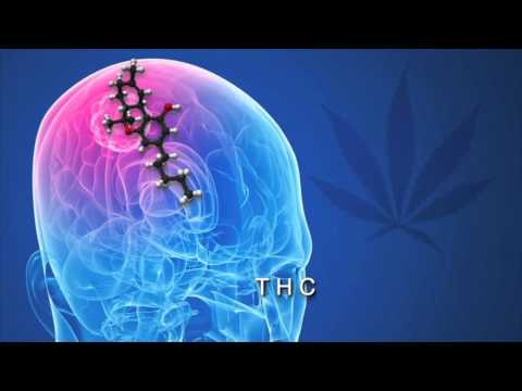 How THC and CBD effects Cancer
