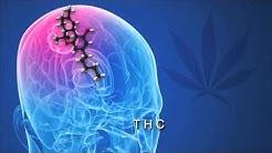 Science Explains How Cannabis Kills Cancer Cells | CBD-Healthcare News