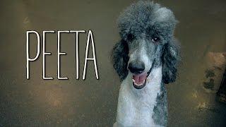 Peeta!!