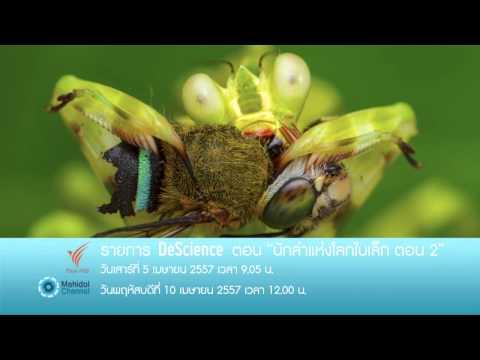 (PV) DeScience วิทย์สนิทศิลป์ : นักล่าแห่งโลกใบเล็ก ตอน 2 (5 เมษายน 57) เรียนรู้โลกของแมลงผ่านเลนส์