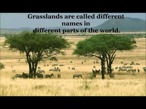 Apes tropical grasslands ms. lech