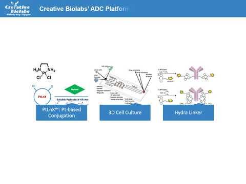 A Brief Introduction Of Antibody Drug Conjugate - Creative Biolabs