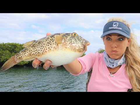 This Fish Can KILL YOU...Catch Clean Cook- Checkered Puffer Fish