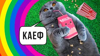 Приколы с котами. Кошачий кайф))) | Мемозг #387