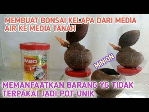 Membuat Bonsai Kelapa Dari Media Air Ketanah Pot Unik Youtube