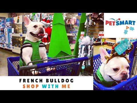 french-bulldog-goes-holiday-shopping-at-petsmart- -frenchie-trekker-tv-🎄-vlogmas-day-13