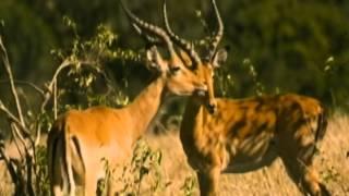 L'amore e gli animali - Animali innamorati