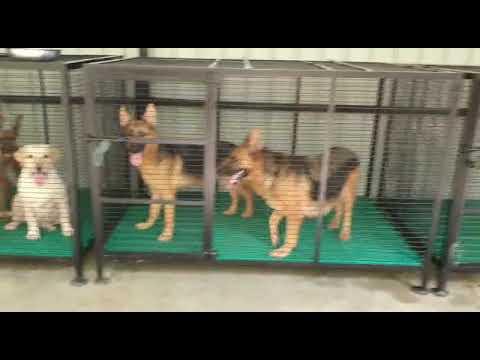 Dog Cage Flooring Kennel Flooring Plastic Matt For Dog Cage Dog Cage Manufactures Kennel Cages