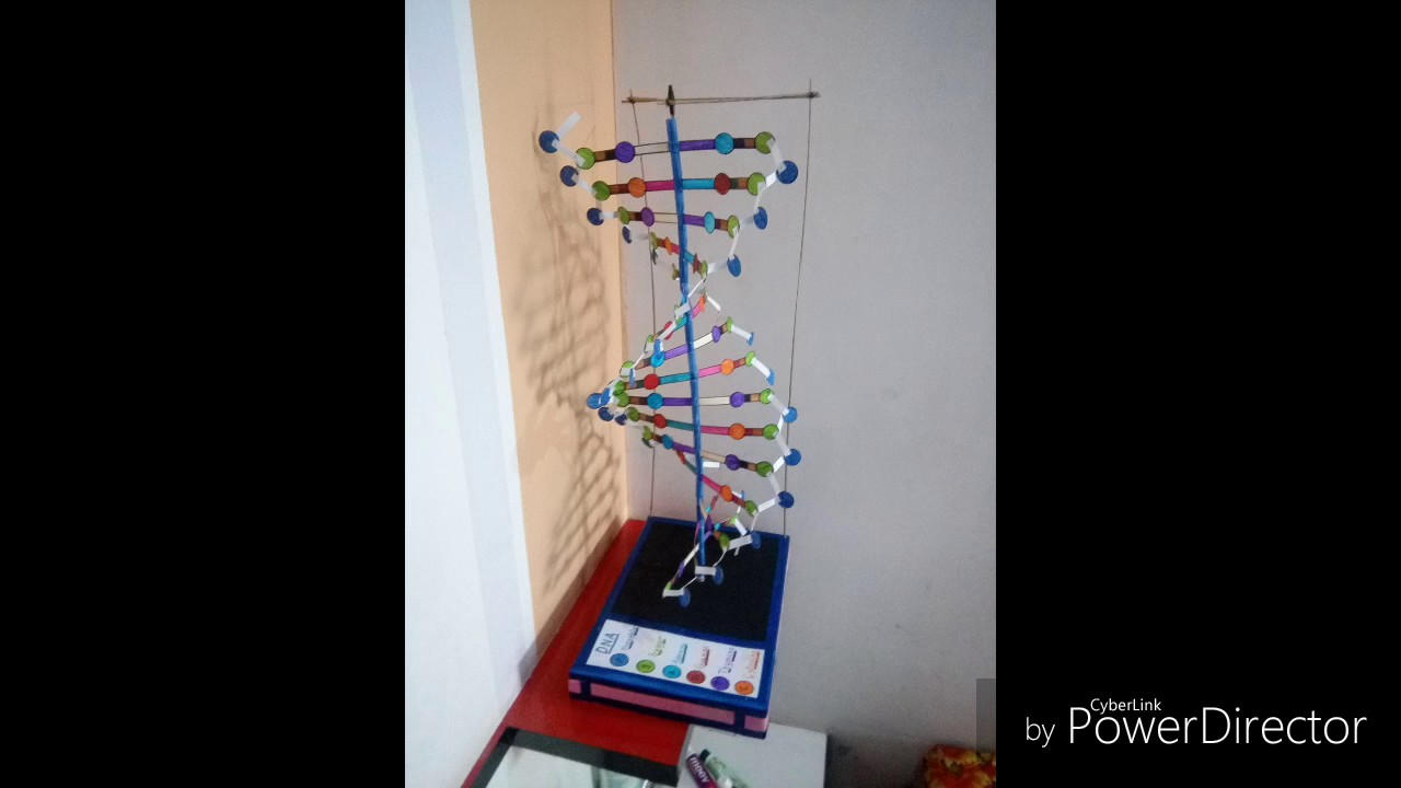 Dna Model With Chart Paper And Wooden Sticks Youtube