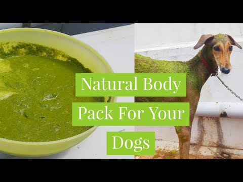 Natural Body Pack For Your Dogs | உங்கள் நாய்களுக்கான இயற்கை Body Pack | Neem Pack