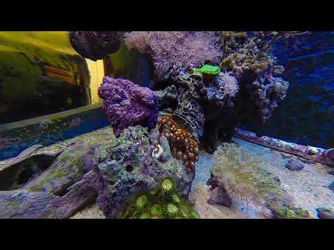 tribute to a Dallas aquarium