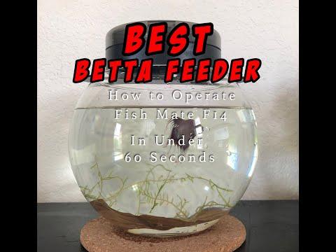 In under a minute: How to use Fish Mate F14 Aquarium Fish Feeder (Best Betta Feeder)