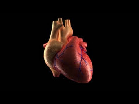 How to work human heart in side body || Medical science & Technology