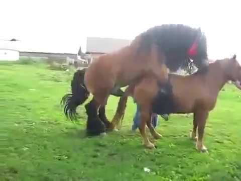 """Playing"" With Animals XXX. from YouTube · Duration:  2 minutes 36 seconds"