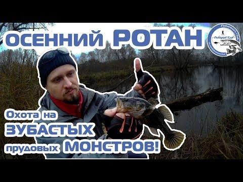 Осенний РОТАН. Охота на ЗУБАСТЫХ прудовых МОНСТРОВ!