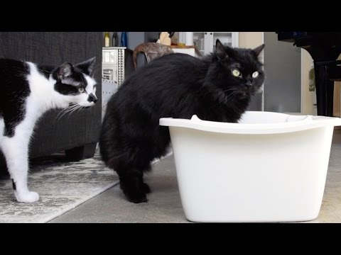 The Mistake You Make When Cleaning The Litter Box