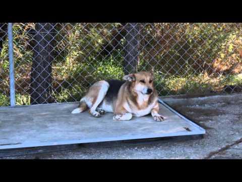 Rhodes  Animal Welfare Society