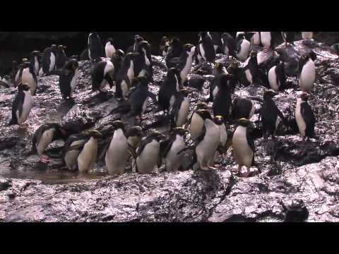 Fascination Antarctica - A voyage to the white continent with Hapag-Lloyd Cruises