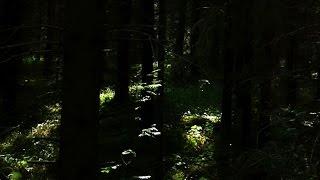 Joel Tammik - Suunataju [Väli Records 2011]