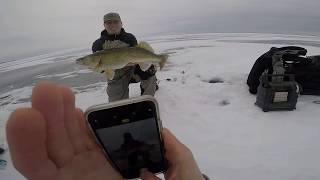 """Ice Fishing GREEN BAY GIANT WALLEYE!! (31.5"""")"""