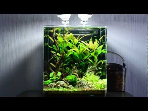 20l dennerle nano cube einrichten 5 gallon nano tank. Black Bedroom Furniture Sets. Home Design Ideas