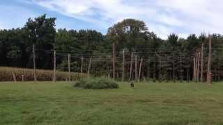 French Creek Organics Hop Farm in St. Peters Pennsylvania