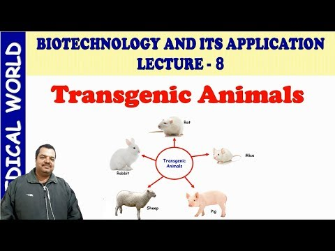 TRANSGENIC ANIMALS | BIOTECHNOLOGY AND ITS APPLICATION | LECTURE 8